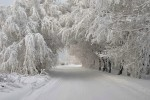 http://cdn.9wows.com/files/2013/01/Snow-covered-Trees-01-800x537.jpg